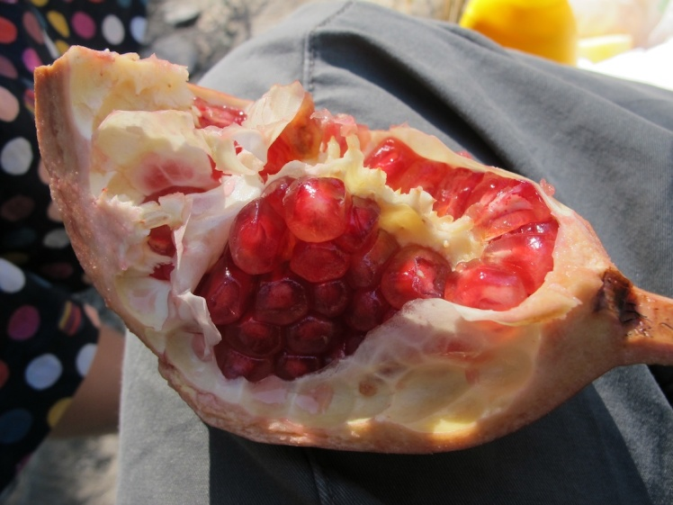 Pomegranate picked from a local tree